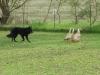 herd32