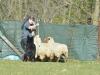 herding_2012_0312