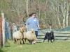 herding_2012_0346