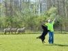 herding_2012_0381