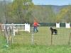 herding_2012_0429