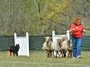 herding_2012_0451