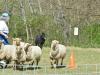 herding_2012_0490