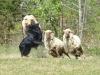 herding_2012_0547
