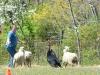 herding_2012_0641
