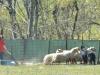 herding_2012_0761